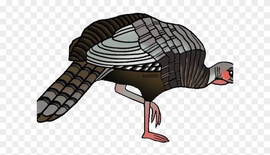 Bird female png . Clipart turkey wild turkey