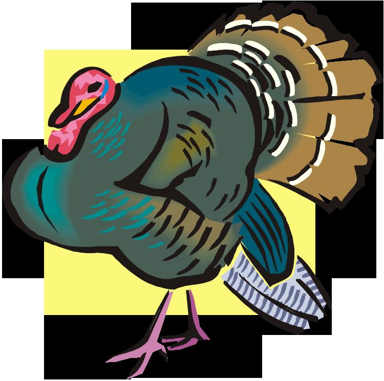 Free . Clipart turkey wild turkey