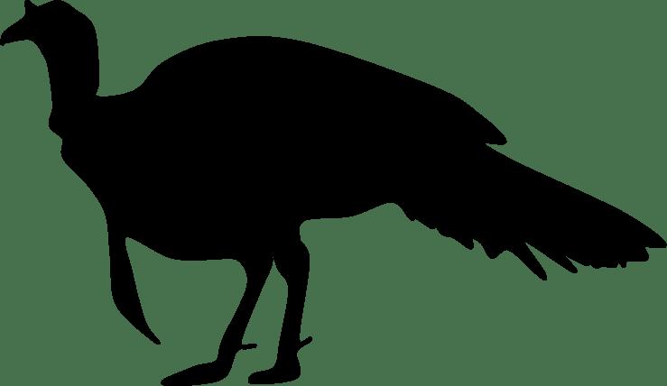 Clipart turkey wild turkey. Shaow greg laden s