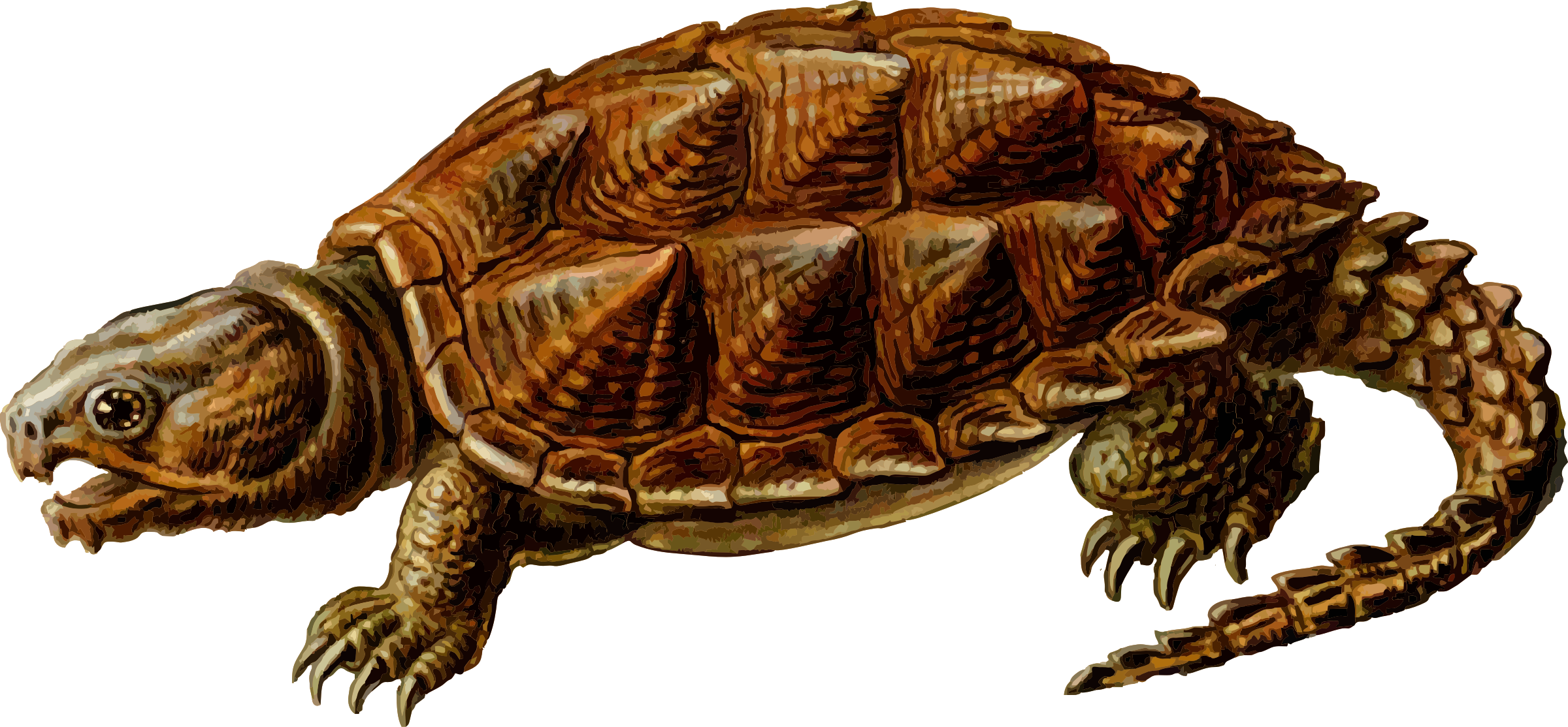 Clipart turtle biotic. Prehistoric by gustavorezende paleontology