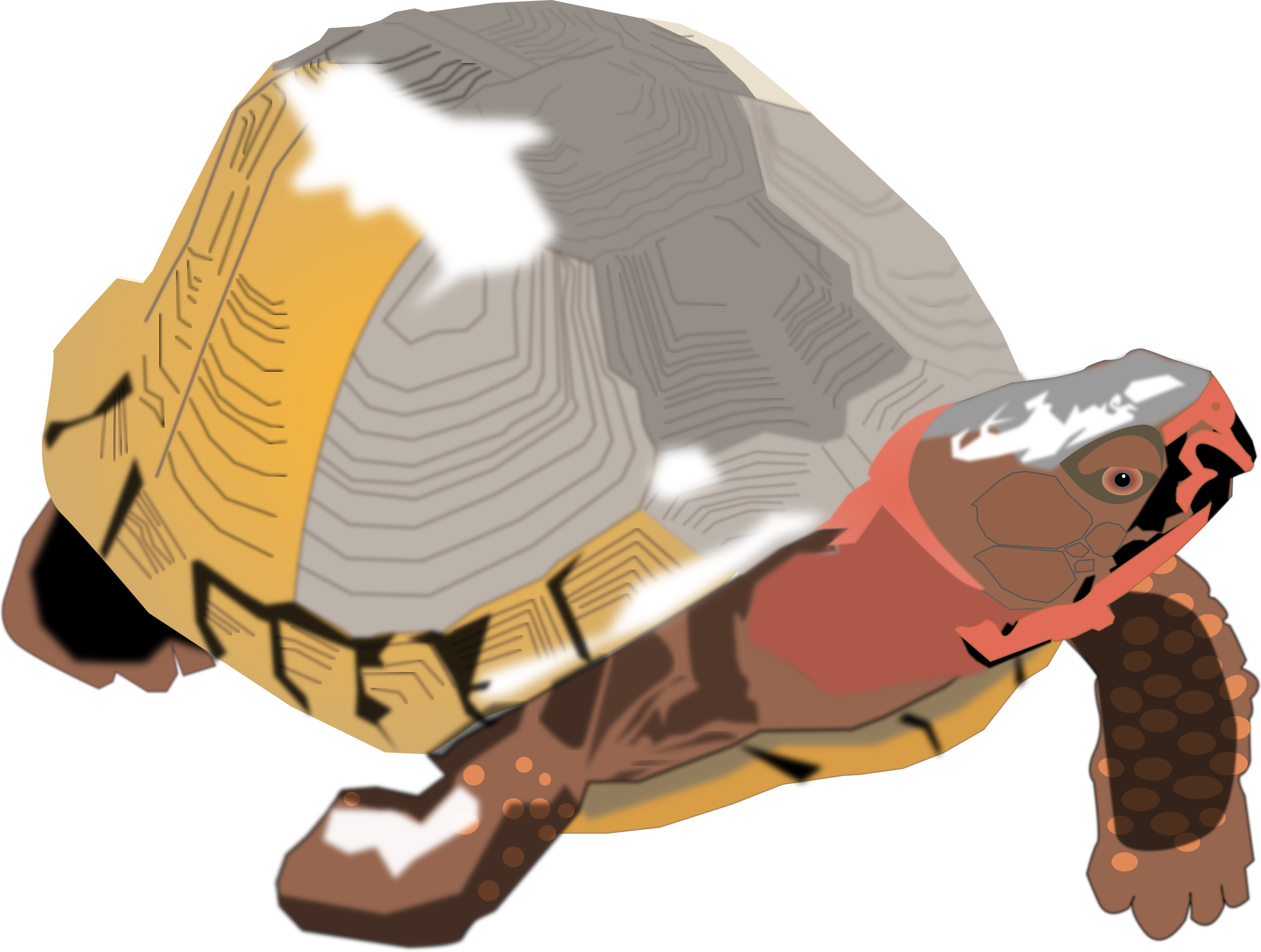 Big image png. Clipart turtle box turtle