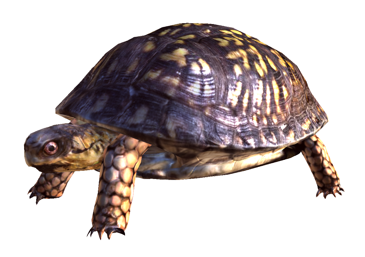 Png free download mart. Clipart turtle box turtle