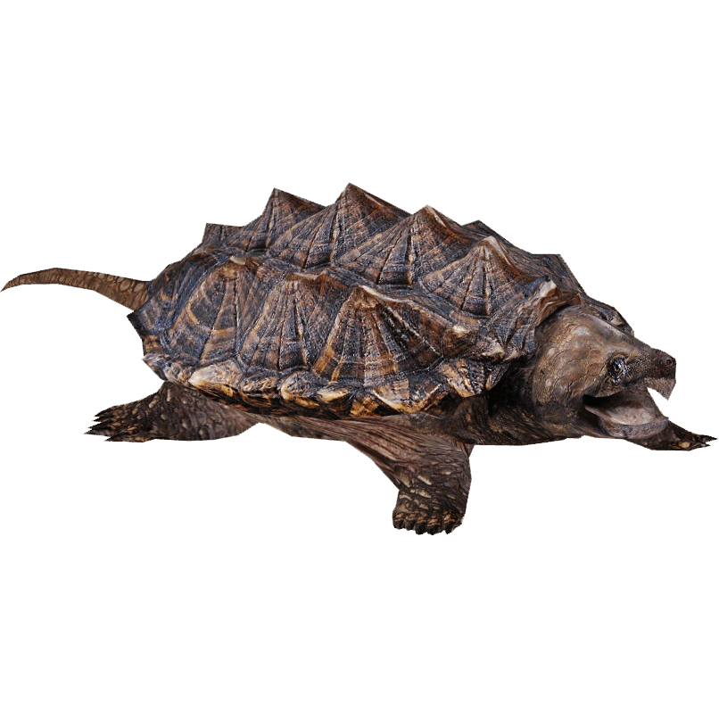 Snapping transparent png stickpng. Clipart turtle clear background