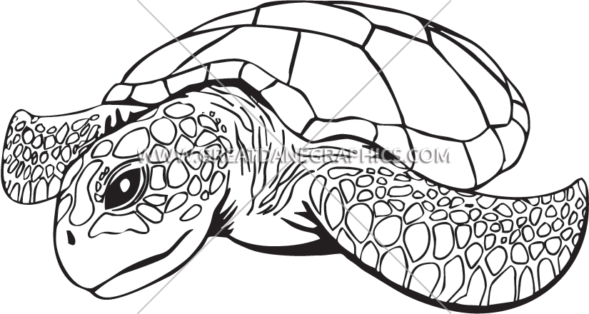 Line drawing at getdrawings. Clipart turtle coloring