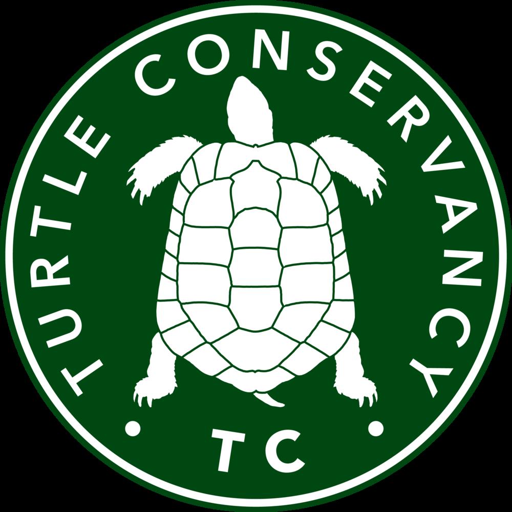 clipart turtle desert tortoise