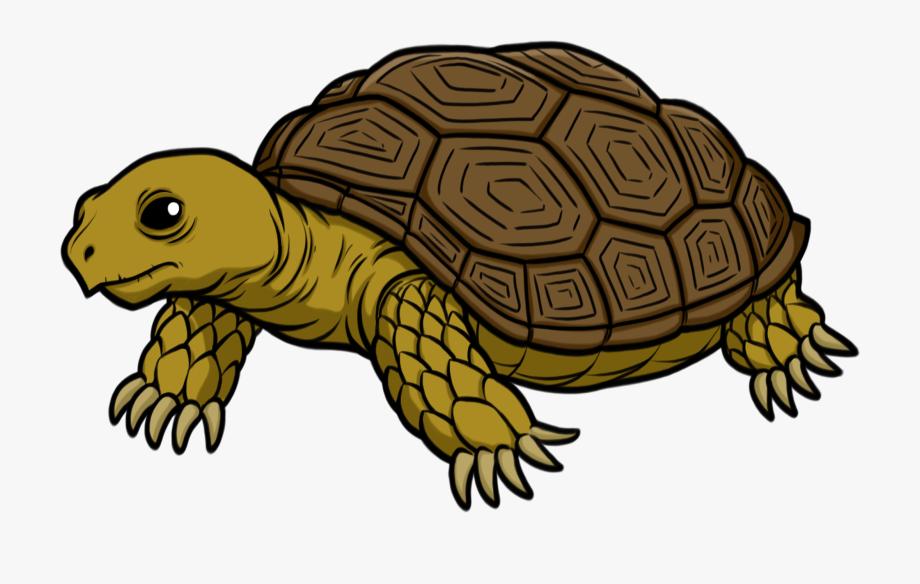 Clipart turtle desert tortoise. Art transparent transprent