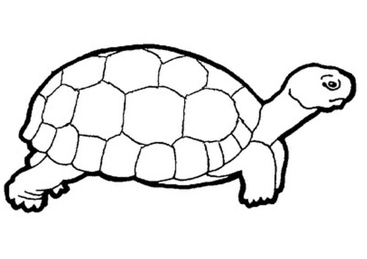 Images for clip art. Clipart turtle desert tortoise