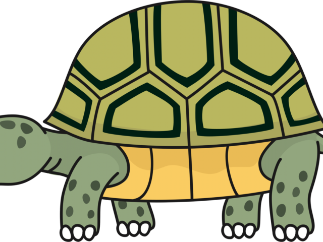 Clipart turtle desert tortoise. Turtoise png transparent