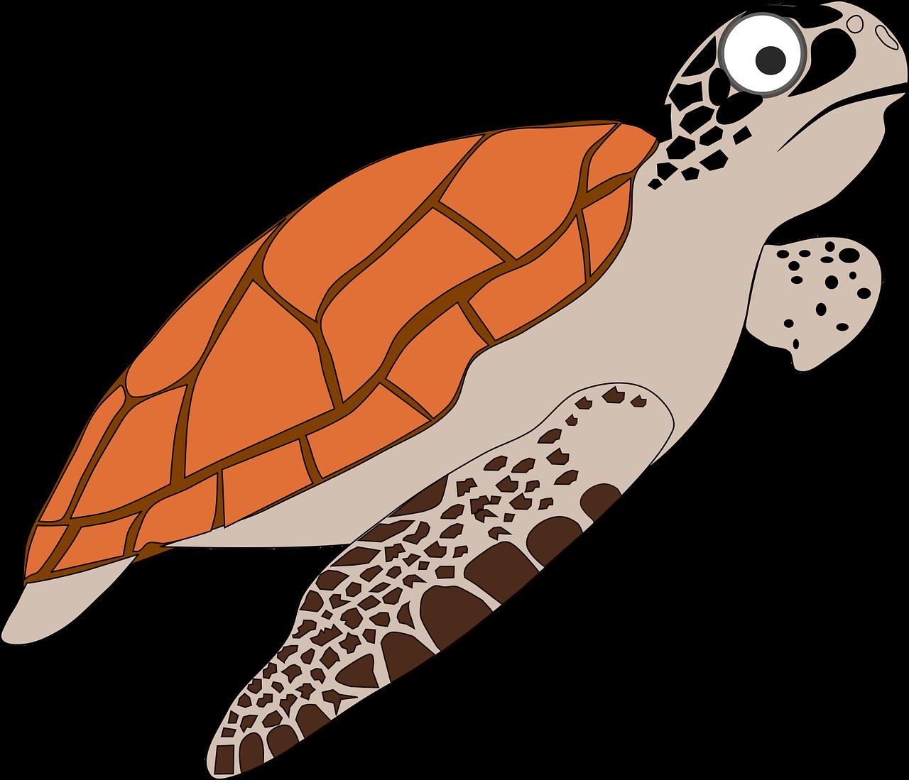 Cartoon sea group orange. Clipart turtle gambar