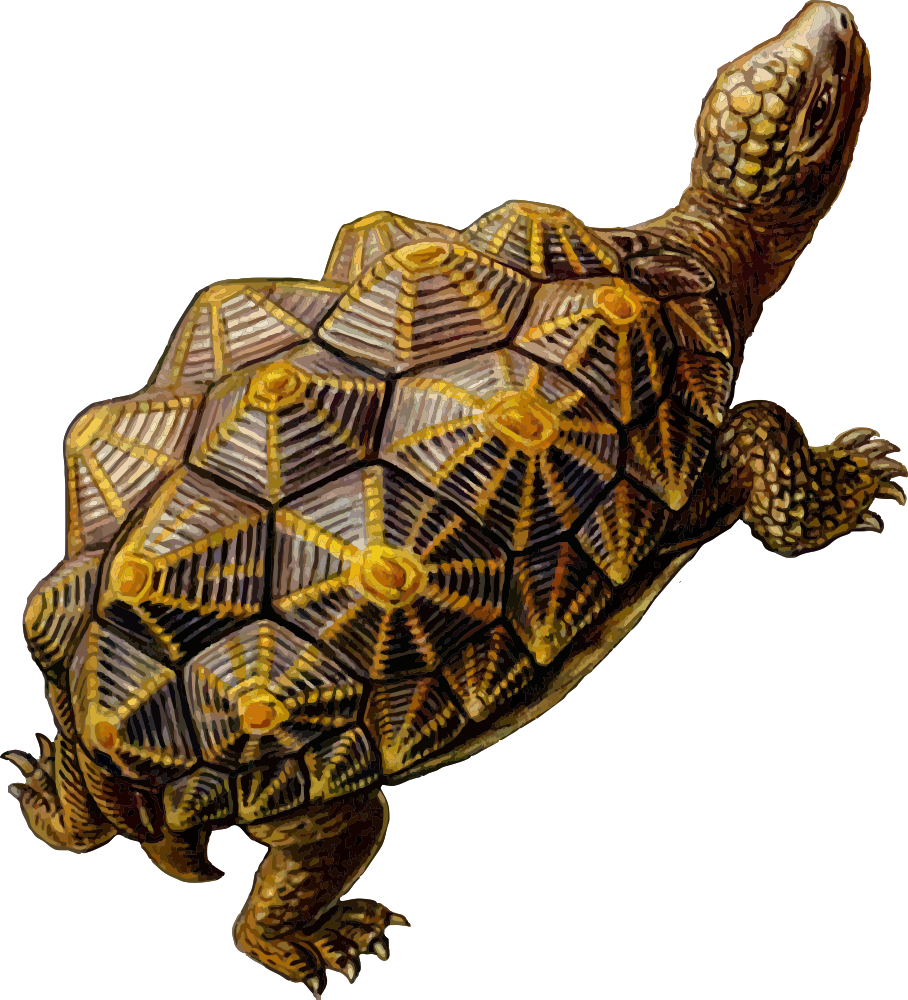 Clipart turtle geometric. Onlinelabels clip art prehistoric