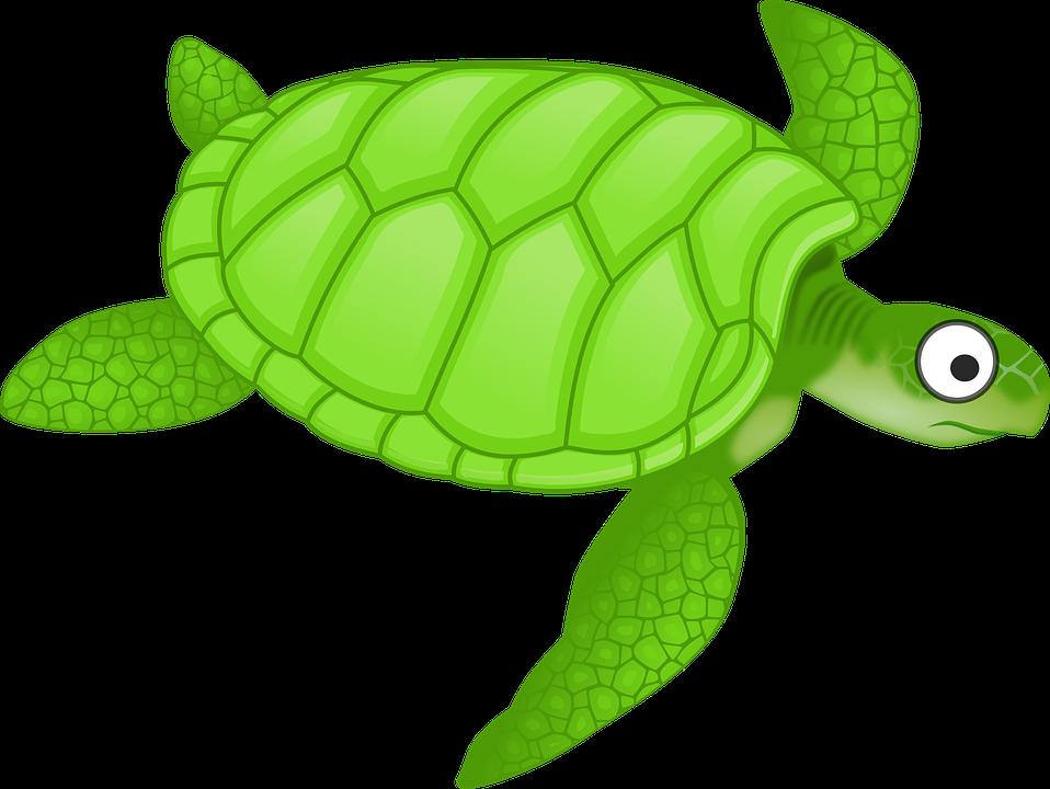 Clipart turtle geometric. Sea cartoon png transparent