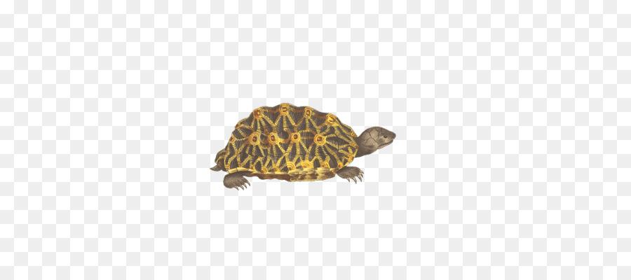 Background transparent clip art. Clipart turtle geometric
