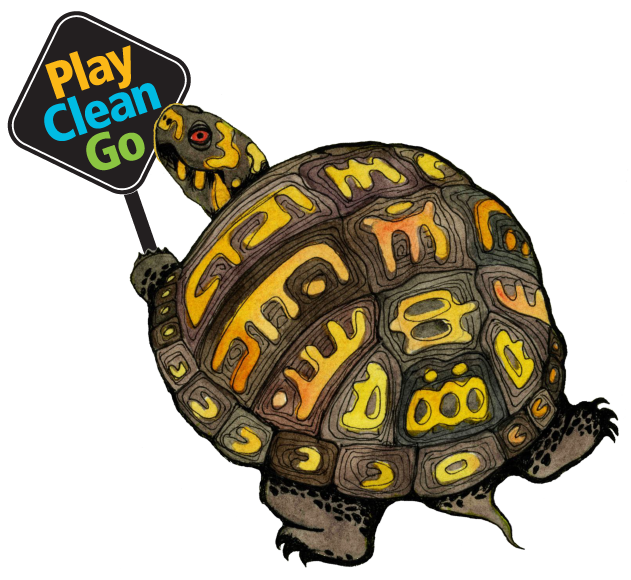 Snapping at getdrawings com. Clipart turtle land turtle