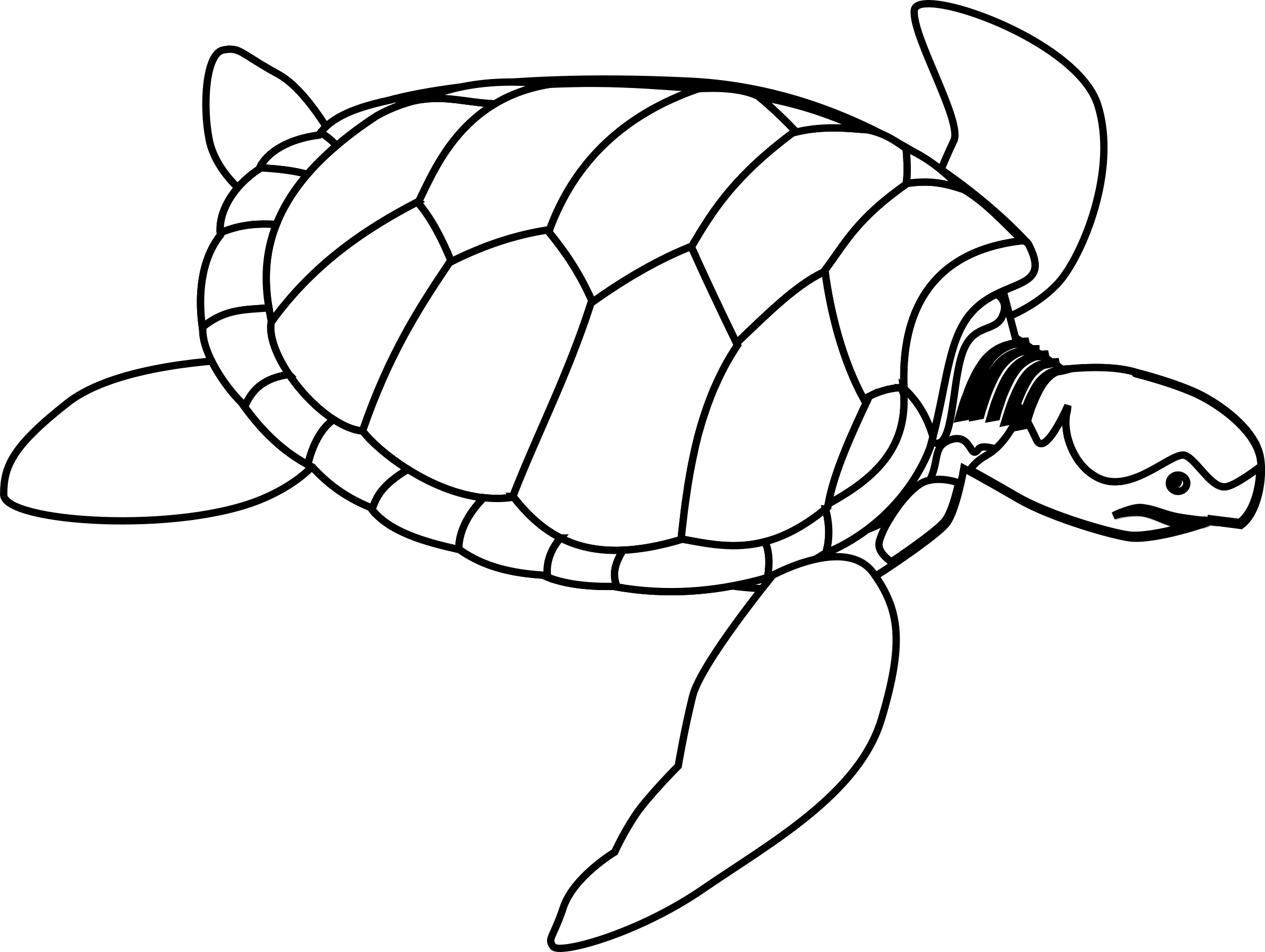 Green sea line art. White clipart turtle