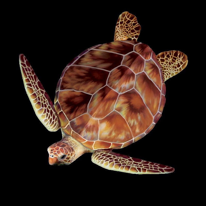 Sea turtles plastic bags. Clipart turtle loggerhead turtle