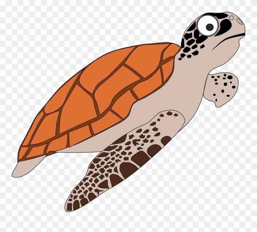 Clipart turtle loggerhead turtle. Sea turtles png
