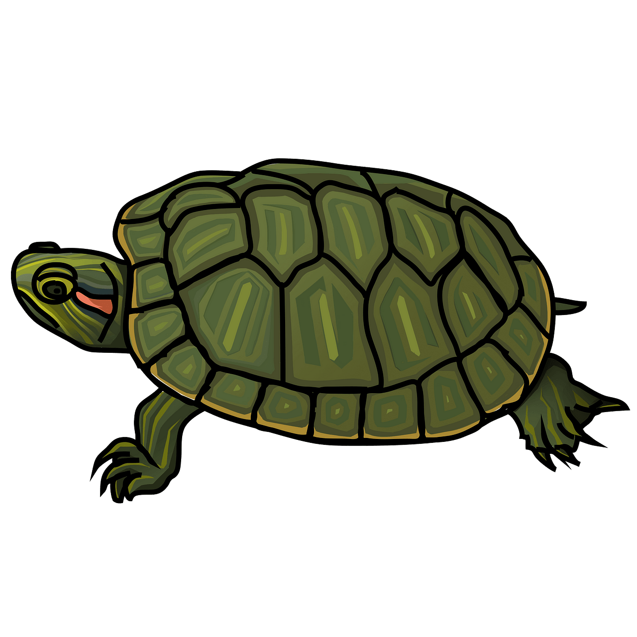 Red eared slider free. Clipart turtle month
