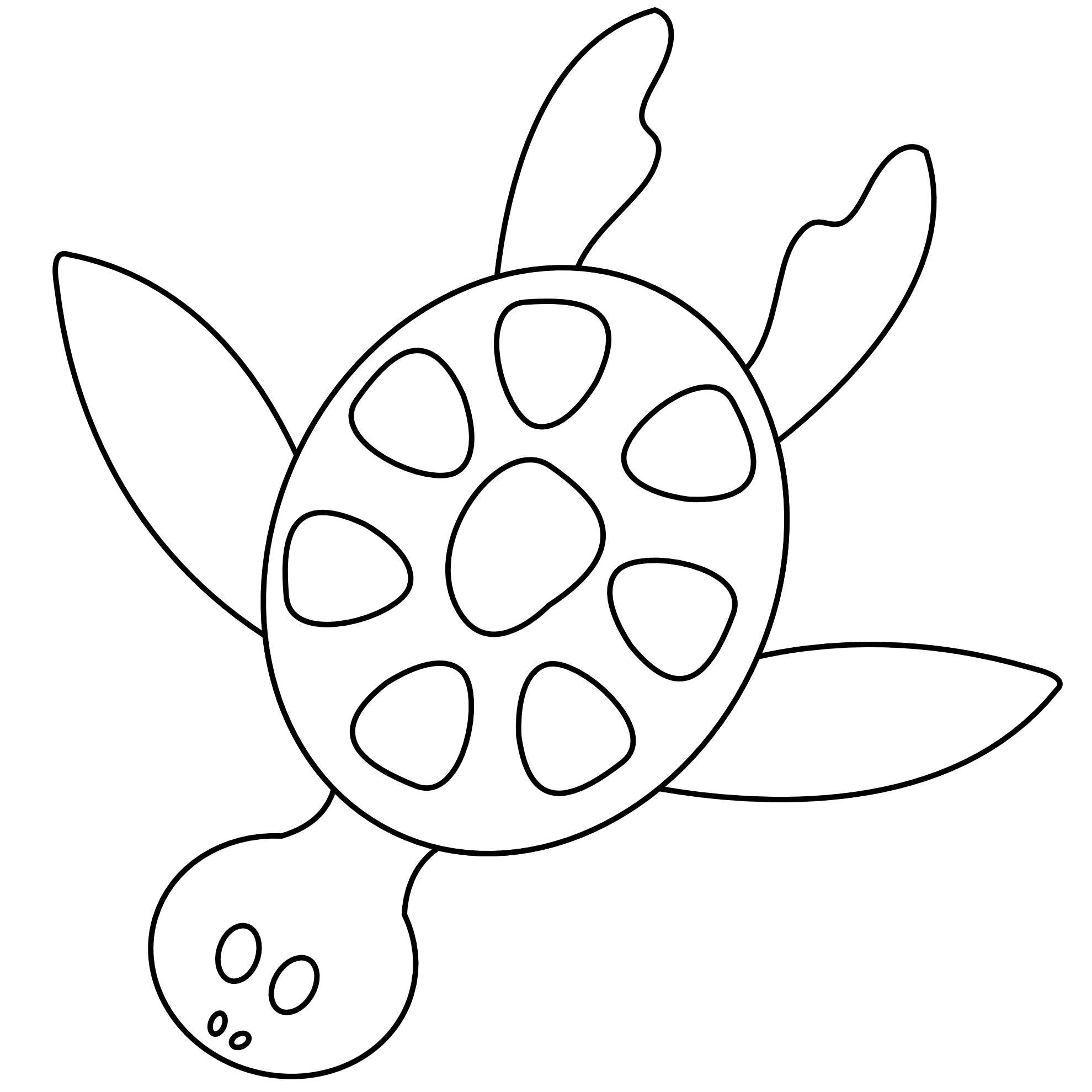 coloring clipart turtle