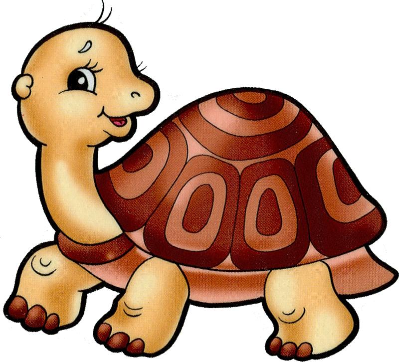 Girly clipart turtle. Cartoon filii clip art
