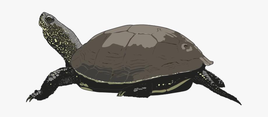 Cartoon free clip art. Clipart turtle pond turtle