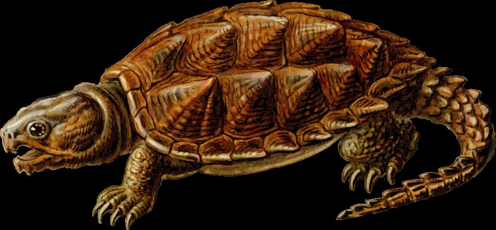 Onlinelabels clip art prehistoric. Clipart turtle pond turtle