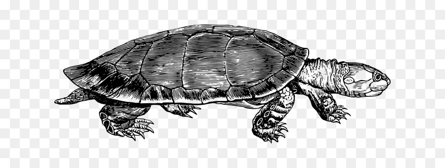 Sea background drawing transparent. Clipart turtle river turtle