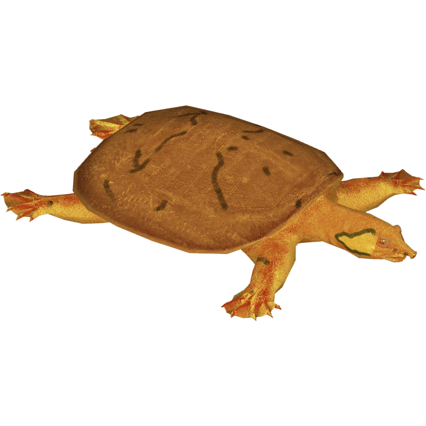 Clipart turtle river turtle. Wattle necked softshell terrena