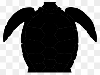 French sea turtles clip. Clipart turtle shadow