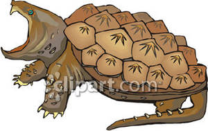 Angry royalty free picture. Clipart turtle snapping turtle