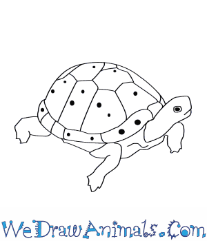 How to draw a. Clipart turtle spotted turtle
