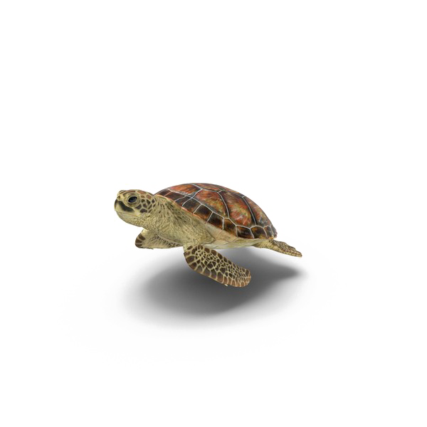 Clipart turtle transparent background. Png mart