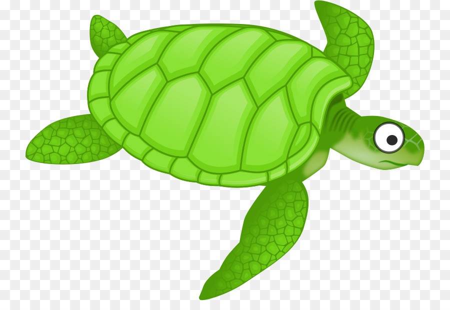 Clipart turtle tutle. Sea background green transparent