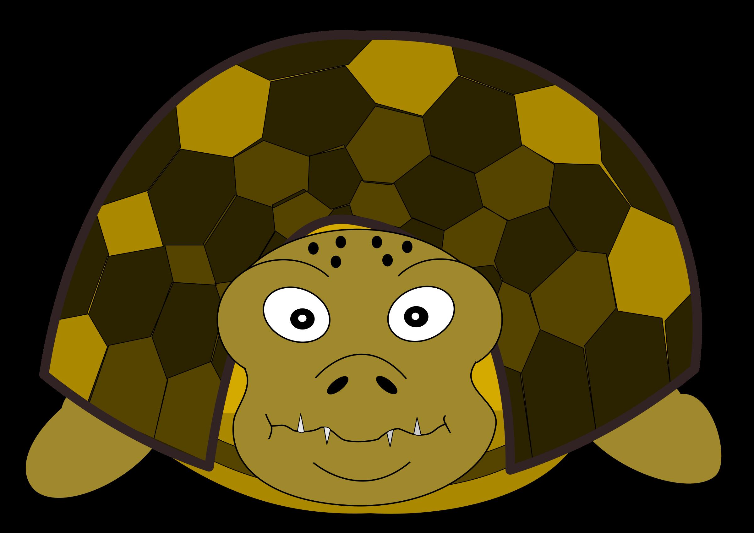 clipart turtle tutle