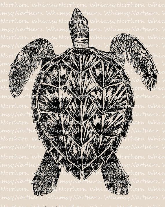 Sea clip art beach. Clipart turtle vintage