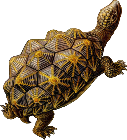 Clipart walking tortoise. Prehistoric turtle clip art