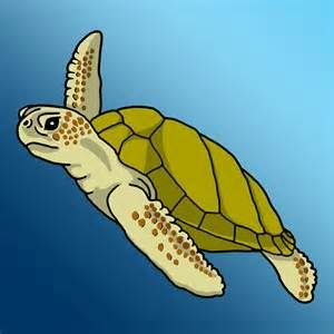 Clip art bing images. Clipart turtle water