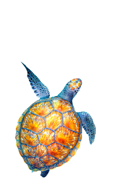 collection of sea. Clipart turtle watercolor