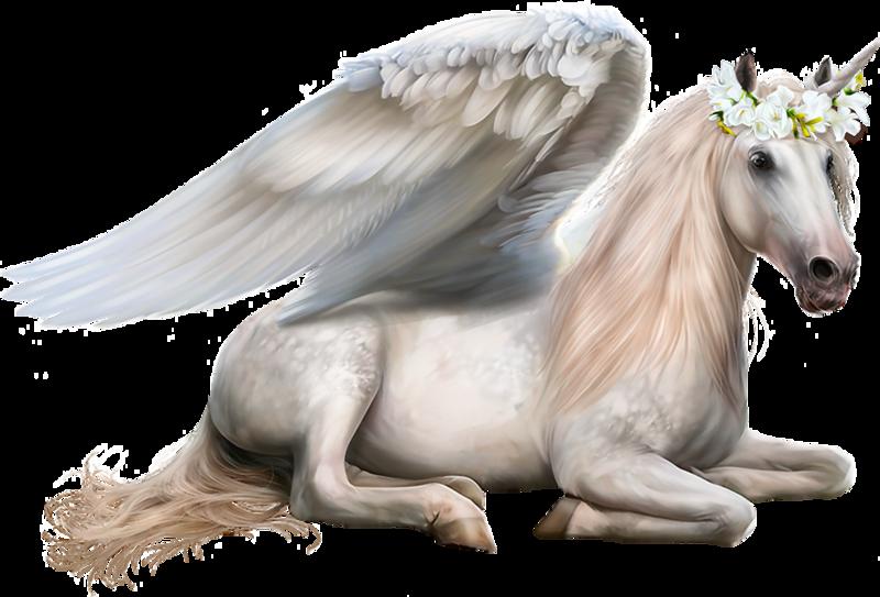 Design wilds d animal. Clipart unicorn cat
