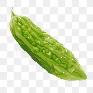Bitter gourd png images. Clipart vegetables ampalaya