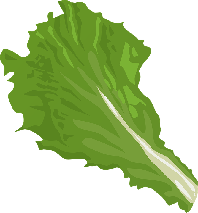 Vegetables clipart bok choy. Asian boondie seeds