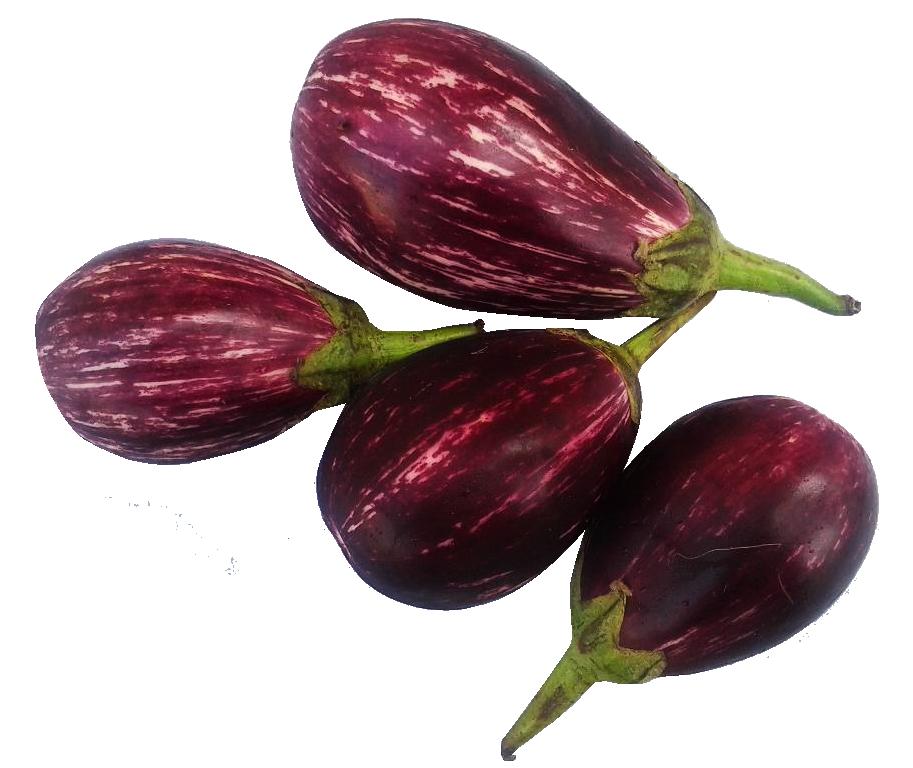 Brinjal png image purepng. Garden clipart eggplant