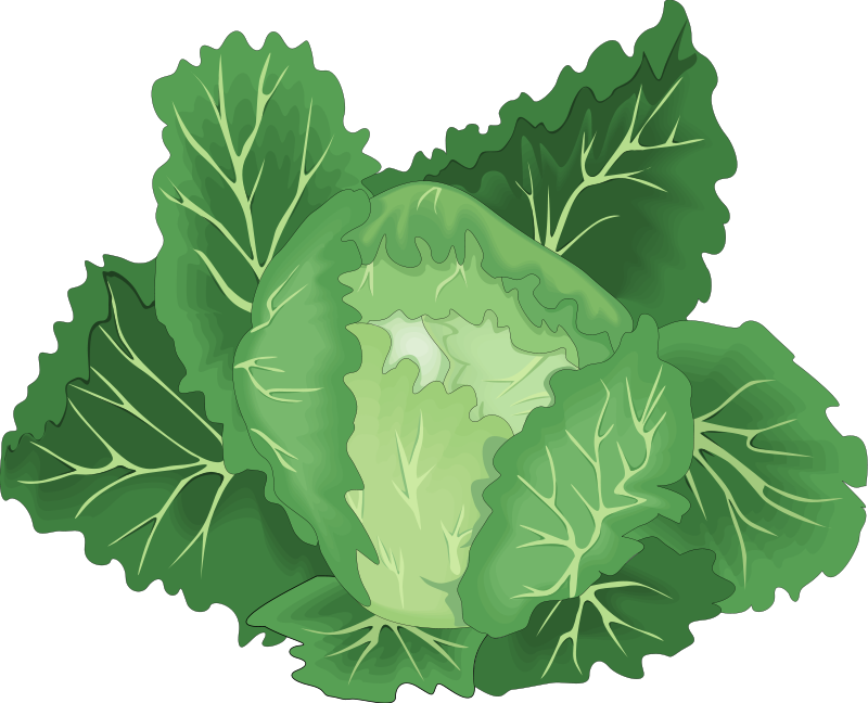 Clipart vegetables cabbage. Leaf vegetable chinese clip