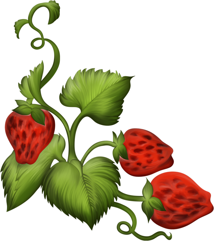 Strawberries clipart fairy. Strawberry christmas plant