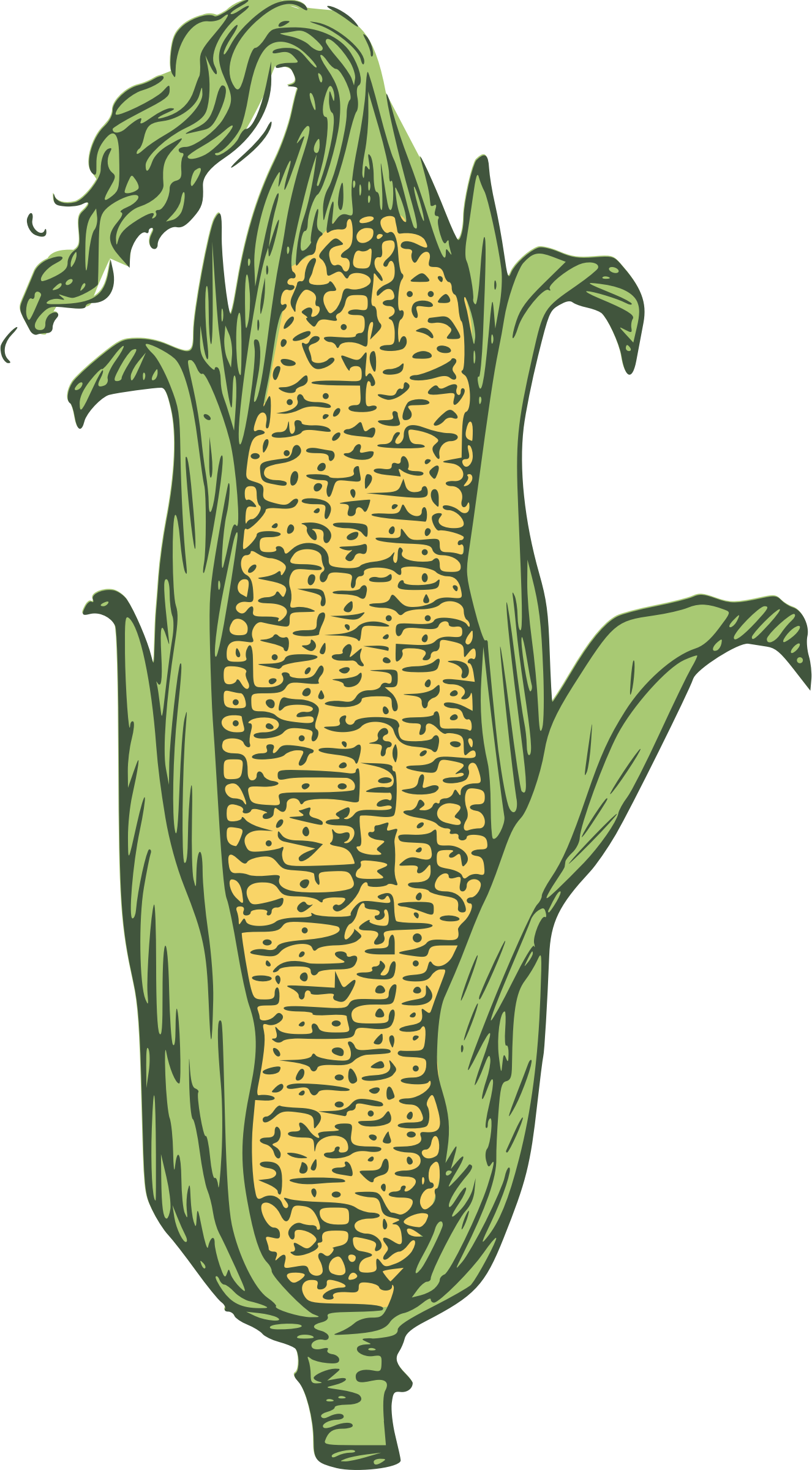 Ear of corn big. Clipart vegetables colored