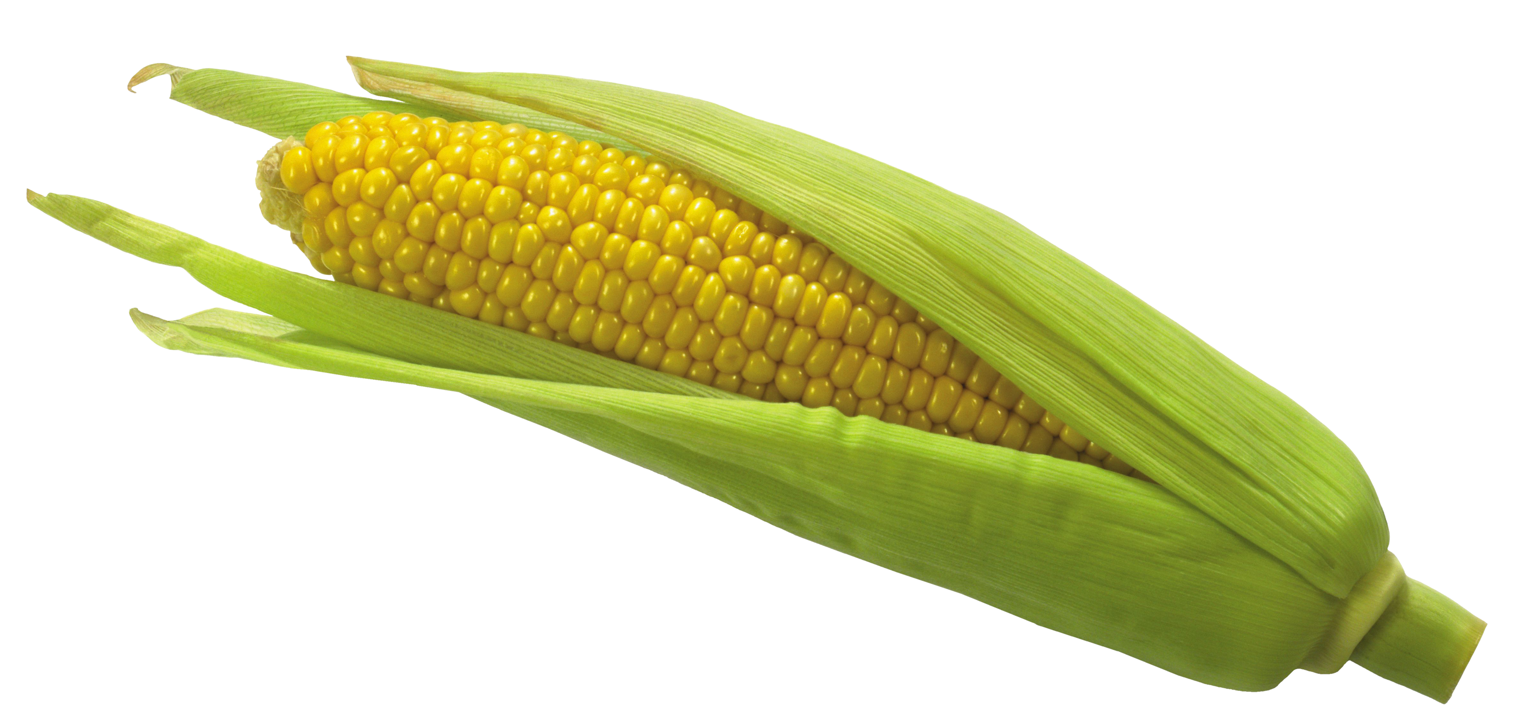 Vegetables clipart corn. Png picture gallery yopriceville