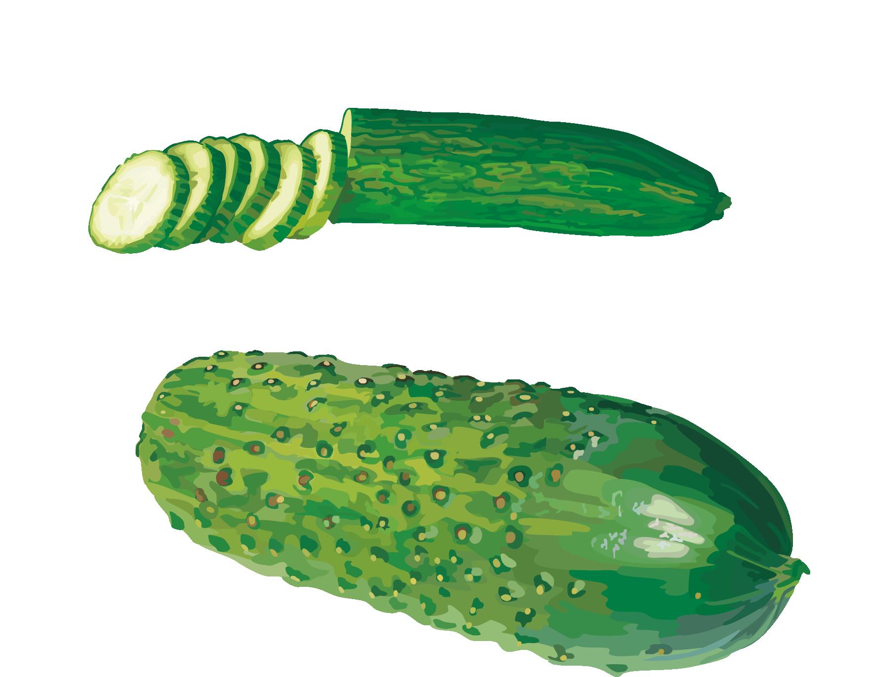 Vegetables clipart cucumber. West indian gherkin vegetable