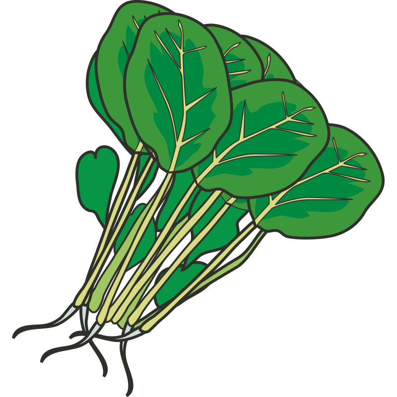 Hot pot leaf spinach. Clipart vegetables green vegetable
