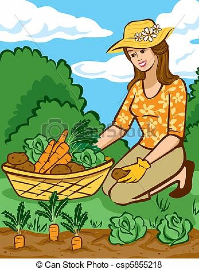 Harvest clipart vegatable. Vegetables vegetable garden vector