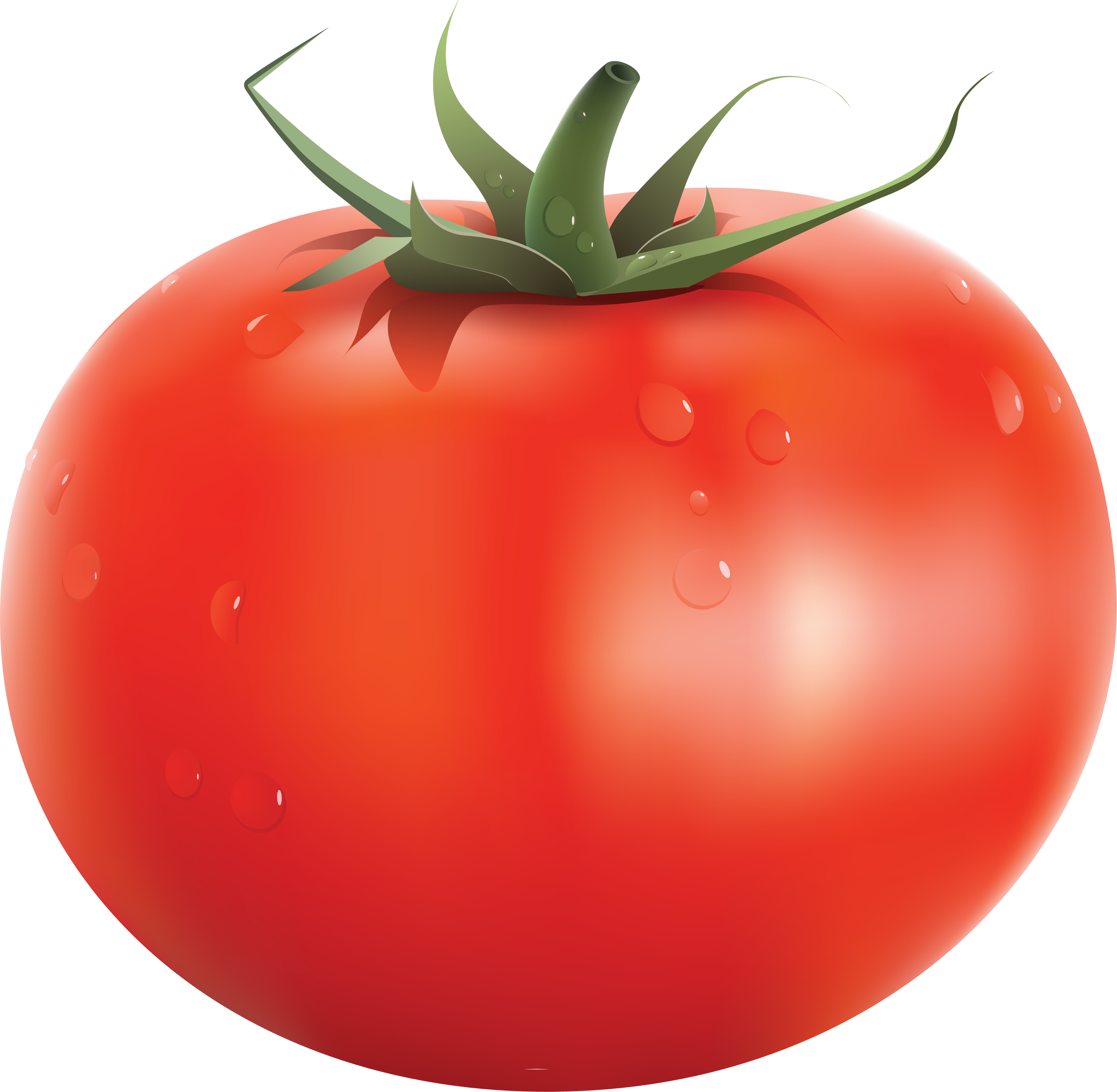 Tomato png images transparent. Tomatoes clipart anaar