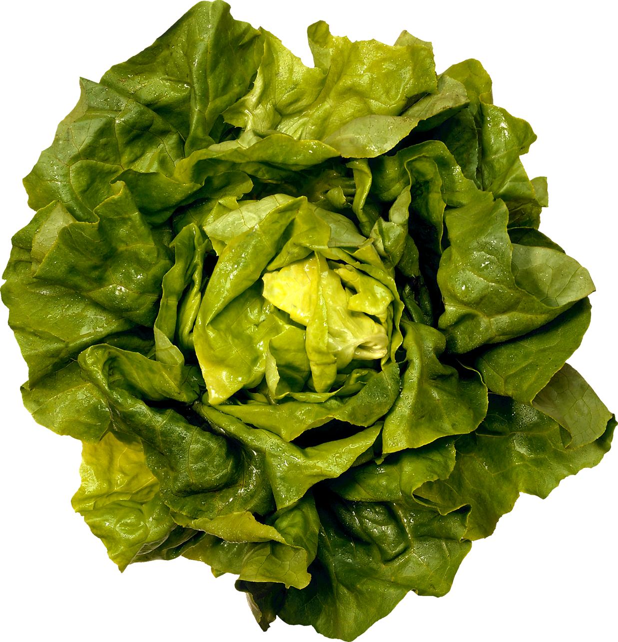 Green salad png image. Clipart vegetables leafy vegetable